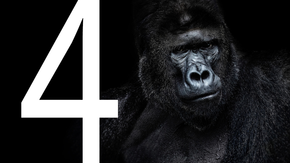 Gorilla with a number 4