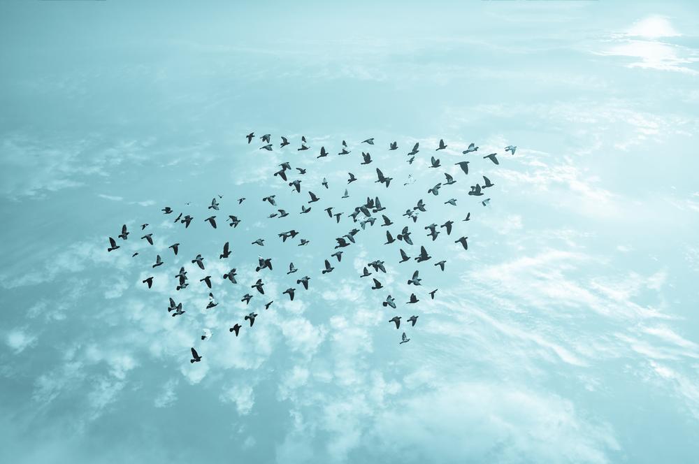 Flock of birds forming an arrowhead