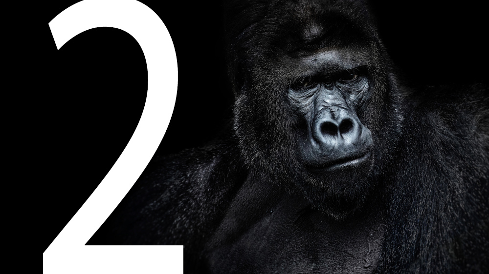 Gorilla and number 2