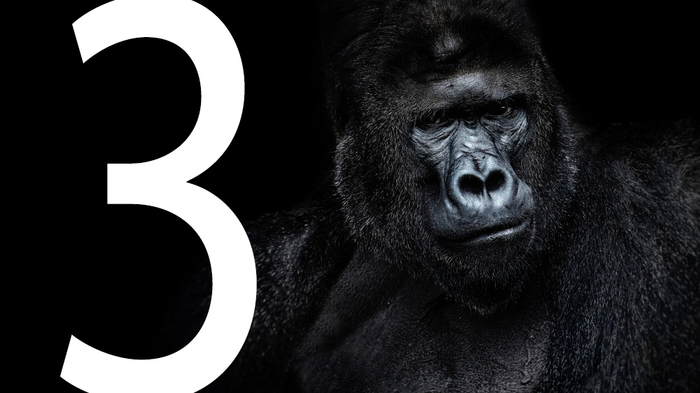 Gorilla with number 3